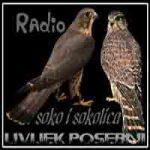 Radio Soko i Sokolica